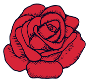 single rose small